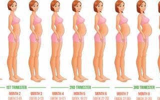 Недели беременности по месяцам