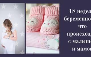 18 акушерская неделя беременности