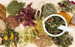 Противогрибковые травы в народной медицине