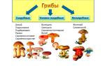 Можно ли кушать грибы беременным